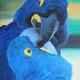 Amore blu, 70x50, olio su tela, 2013